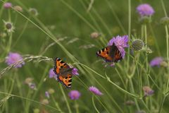 2 butterflies sitting on flowers Royalty Free Stock Photo