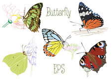 Butterflies sitting on Royalty Free Stock Photo