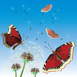 Butterflies sittings on dandelions. Royalty Free Stock Photos