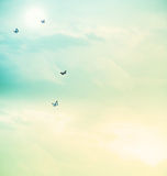 Butterflies in the sky Royalty Free Stock Photography