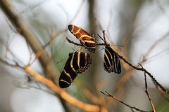 Butterflies sleeping Royalty Free Stock Photography