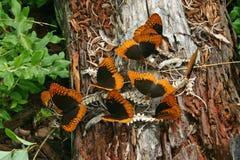 Butterflies on Snake Skeleton