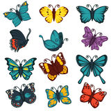 Butterflies species types decoration design element vector icons set. Butterflies icons. Exotic species of swallowtail, tropical monarch and hawk-moth, machaon Royalty Free Stock Photo
