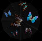Butterflies and spiderweb. Various colorful butterflies caught in a spider orb web in black back Stock Images