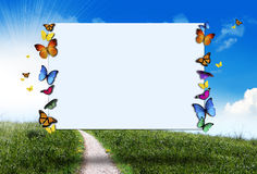 Butterflies spring sign Stock Photos