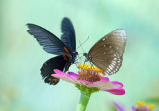 Butterflies. Stand on colour flower Royalty Free Stock Images