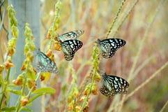 Butterflies. Sucking honey from the flowers stock photos