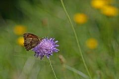 Butterflies swarm in the grass
