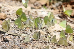 Butterflies in Thailand Stock Photo