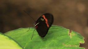 Butterflies stock footage