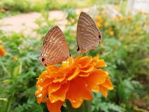 Butterflies valentine royalty free stock photos