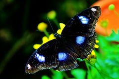 Butterfly close up Royalty Free Stock Photo
