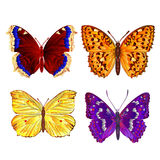 Butterflies various vector Royalty Free Stock Photo