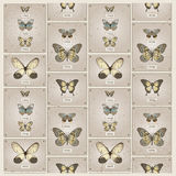 Butterflies vector background Stock Image