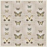 Butterflies vector background Stock Image
