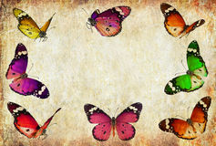 Butterflies vintage frame. Nature abstract frame background Stock Image