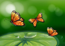 Butterflies and water lily Royalty Free Stock Photos