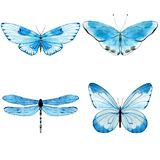 Butterflies. Watercolor blue butterflies. Collection of insects isolated on white. Hand painted illustration for summer design stock photos