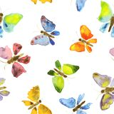 Butterflies watercolor seamless pattern. Hand drawing on white background. stock illustration