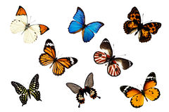 Butterflies on white Royalty Free Stock Photos