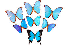 Butterflies on white Stock Photos