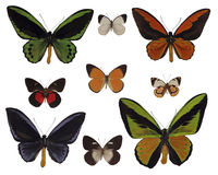 Butterflies on white. (isolated, insect Stock Images