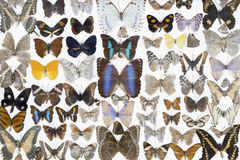 Butterflies on a white background Stock Photos