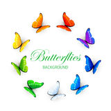 Butterflies on white background Stock Photos
