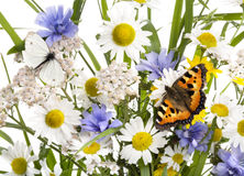 Butterflies in wild flowers Stock Photos
