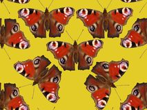 Seamless pattern with butterflies. royalty free stock photos