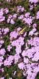 Butterflight stock afbeelding