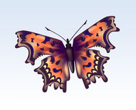 Butterfly 1 Royalty Free Stock Photography