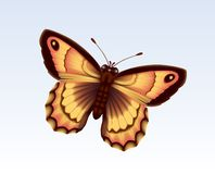 Butterfly 10 Royalty Free Stock Photos