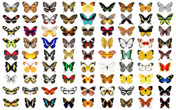 Butterfly. Layered vector illustration of various butterfly