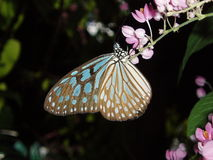 Butterfly. Photo of a butterfly Stock Photo