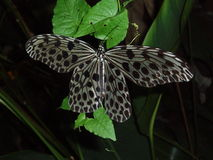 Butterfly. Photo of butterfly Stock Photography