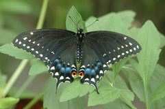 Butterfly. Black butterfly on green plant stock photo