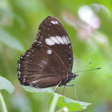 Butterfly. A butterfly perched on a leaf Stock Images