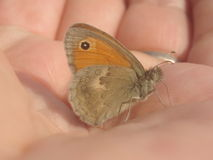 Butterfly. On my hand Royalty Free Stock Images