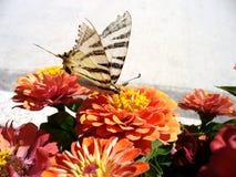 Butterfly. Macro Royalty Free Stock Photos