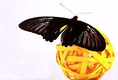 Butterfly. Black butterfly with yellow stripes on a yellow ball Stock Photography