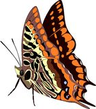 Butterfly. Illustration Stock Photography