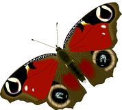 Butterfly. Illustration Royalty Free Stock Images