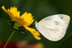 Butterfly. On the flower in spring Royalty Free Stock Photography