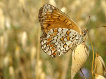 Butterfly. On plant Royalty Free Stock Photography