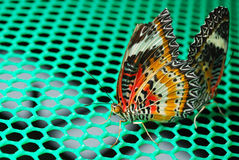 Butterfly. Butteflys to a lover and butterflys duble clamp Stock Image