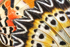 Butterfly. Wing of butterfly and detial of wing Stock Images