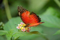 Butterfly. On a Flower Stock Photography