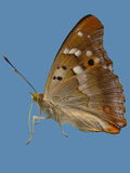 Butterfly. Isolated photo of butterfly over blue background Stock Images