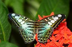 Free Butterfly Stock Photos - 1164443
